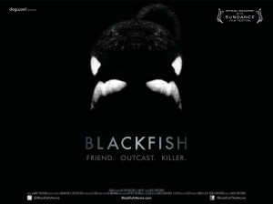 Blackfish_quad2